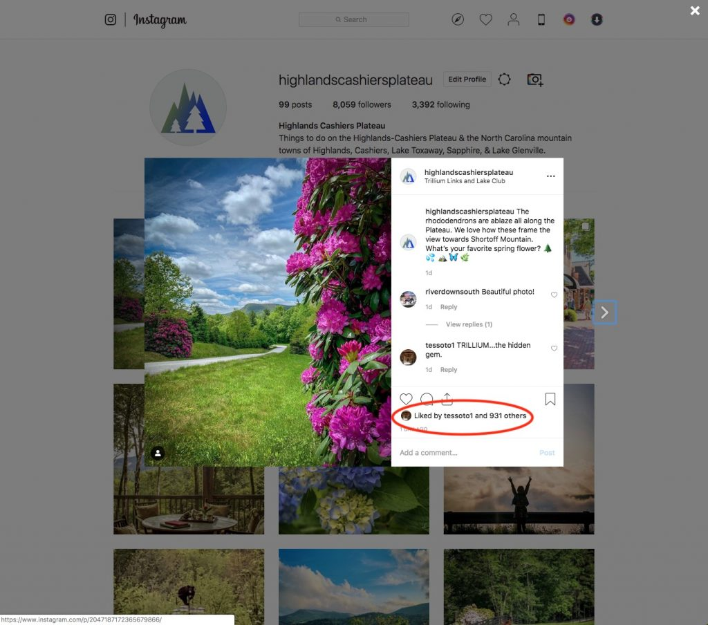 Social Media Company Asheville
